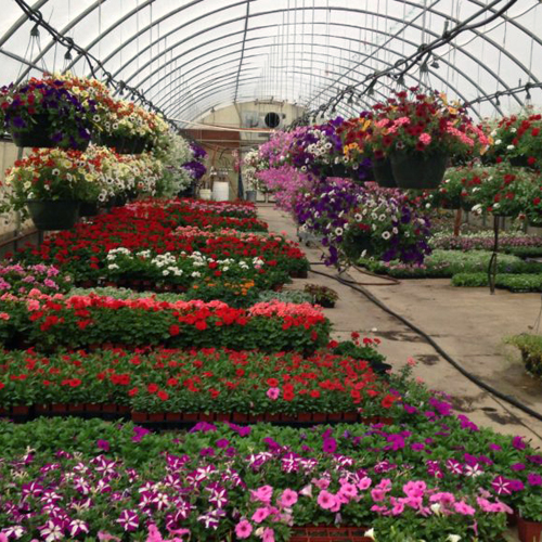An array of annuals in our greenhouses