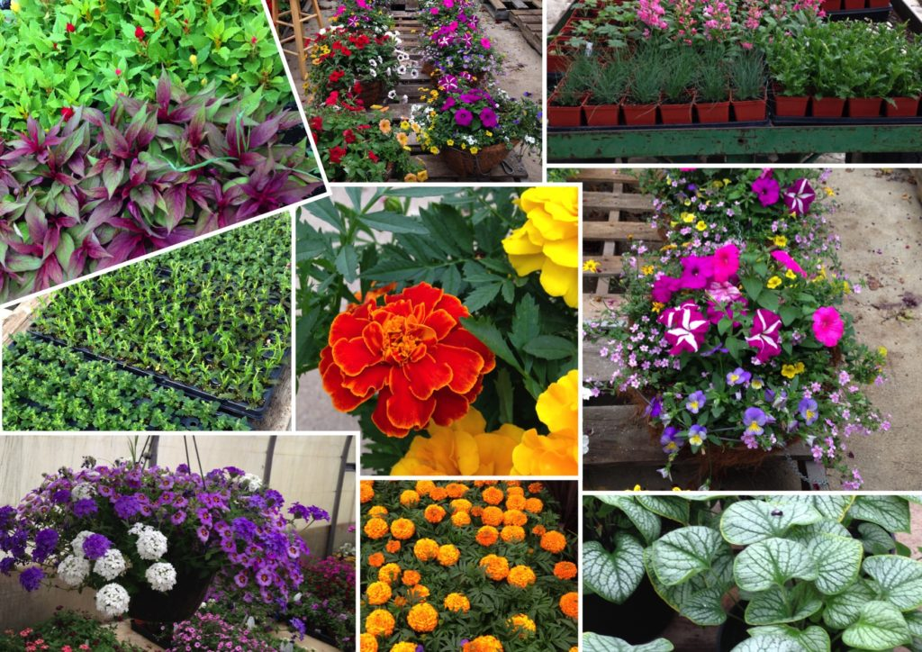 plants grown by Larchwood Nurseries