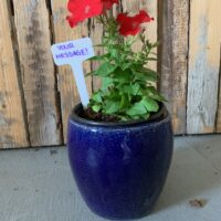 custom planted container Mother's Day gift