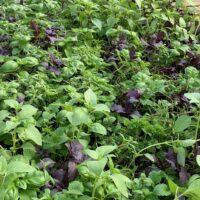 herb variety 6-pack
