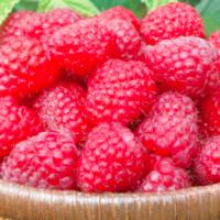 red mammoth raspberries