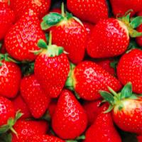 honeoye everbearing strawberries